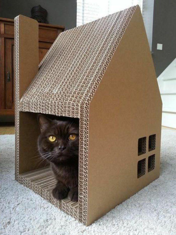 maison chat