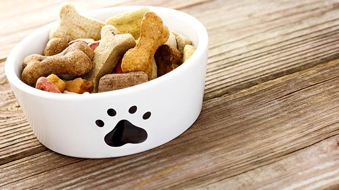 animaux nourriture