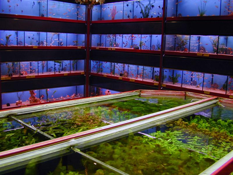 aquariophilie boutique