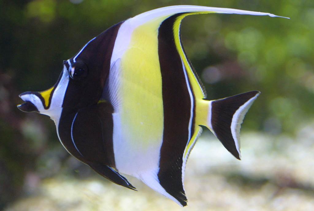 aquarium poisson
