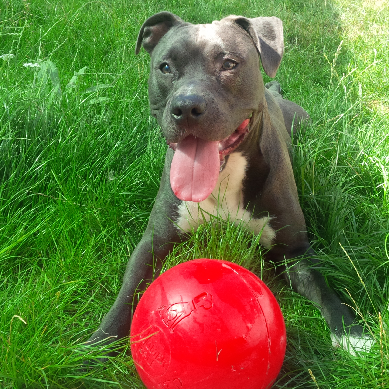 balle pour chien indestructible