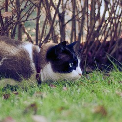 chat chasseur