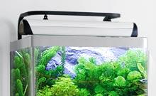 eclairage pour aquarium