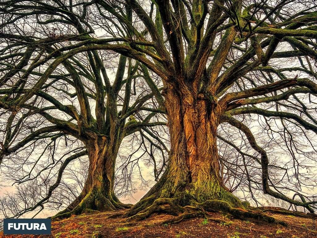 grand arbre