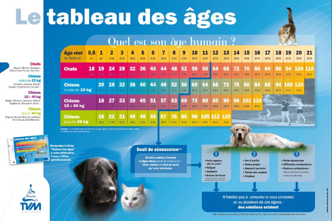 l age des chats