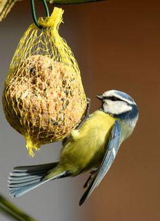 nourriture oiseaux