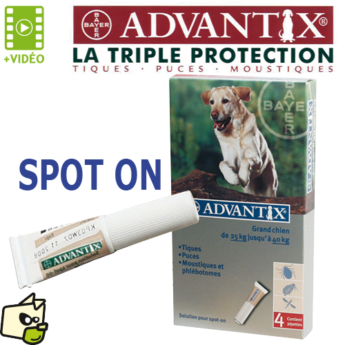 pipette puce chien